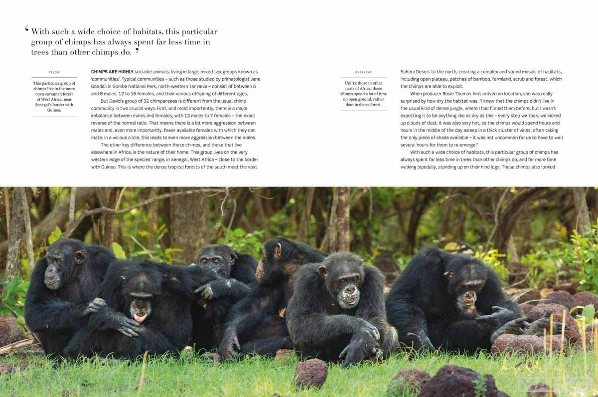 DYNASTIES THE RISE AND FALL OF ANIMAL FAMILIES